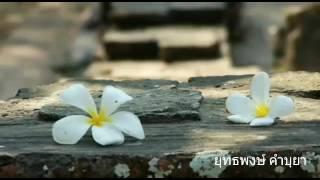## ดอกไม้ในป่าช้า - อัมพร แหวนเพชร