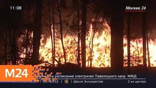 """Смотреть видео Причиной пожара в парке """"Лосиный остров"""" мог стать поджог - Москва 24 онлайн"""