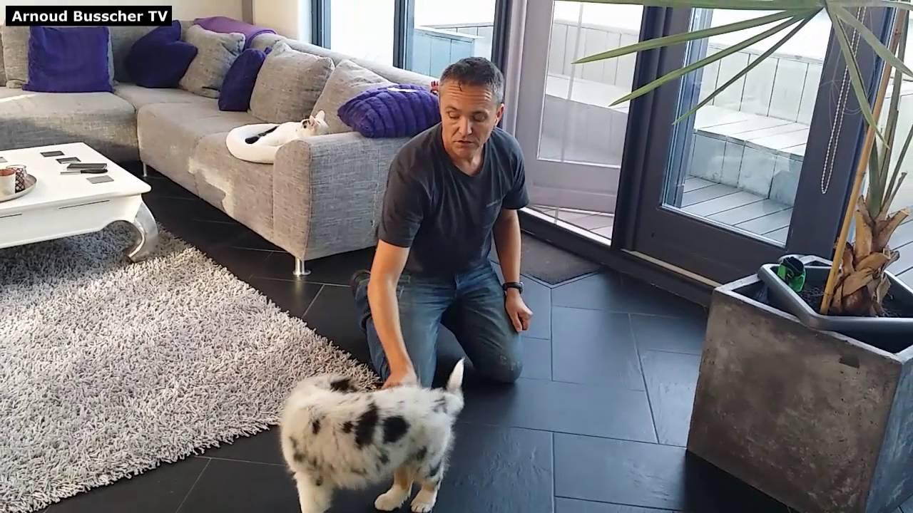 Zitten En Liggen.Leren Zitten En Liggen Puppy Cursus Hondenspecialist Arnoud Busscher