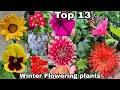 Top 13 Winter Flowering Plants    Winter Season Flowering Plants    The One Page