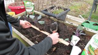 Planting Cabbages in Raised Bed Gardens: Cool Weather Crops - MFG 2014