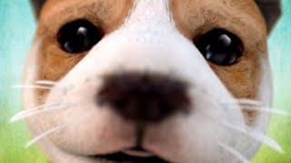 """Играю в игру """"Dog simulator"""" (симулятор собаки) взлом (ссылка в описании)"""