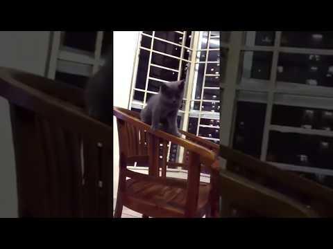 Kitten playing & climbing
