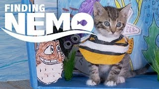 Repeat youtube video Disney Pixar's Finding Nemo (Cute Kitten Version)