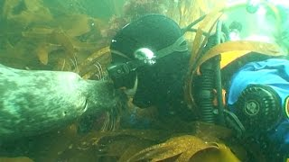 Sealed With A Kiss: Adorable Seals Befriend Diver
