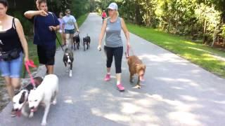 Free Pack Walks- Take The Lead K9 Training