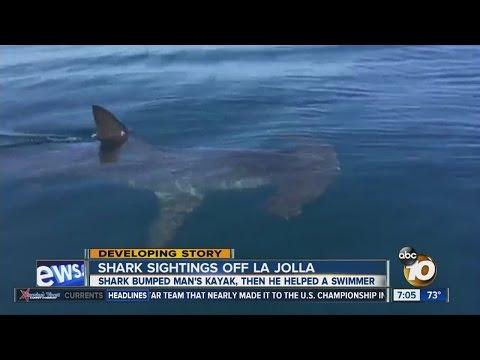 Shark bumped man's kayak in La Jolla