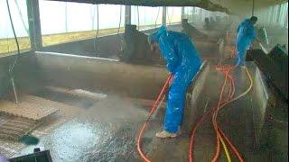 Limpeza, desinfecção e vazio sanitário em granjas de suínos
