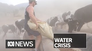 The once green NSW town of Gloucester is praying for rain | ABC News