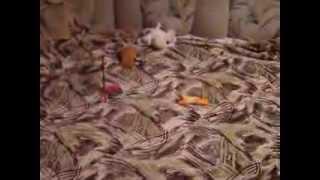 собака по кругу гоняка,на спине лежака и за пальцы кусака))))))))))))))))