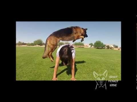Kaine's Amazing Dog Tricks 2012 Remix