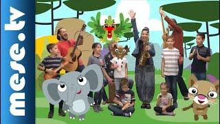Kiskalász együttes: Gyere az állatkertbe! - MESE TV