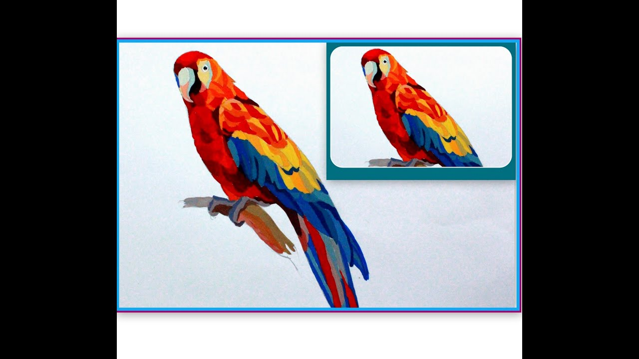 Uncategorized Draw A Parrot drawing lessons how to draw a parrot youtube