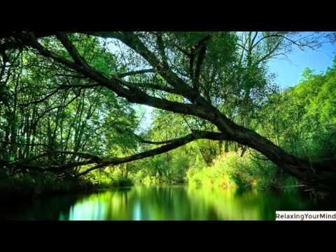 Relaxing Amazon Rainforest sounds - 1 hour Relaxation, Sleep and Meditation