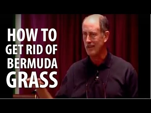 How To Get Rid Of Bermuda Grass - The Dirt Doctor