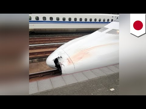 Bullet train accident: Parts found in nose of train TomoNews