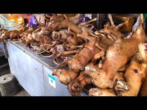 dog-meat-festival,-hundreds-of-dogs,-the-scene-is-spectacular!-lychee-with-dog-meat