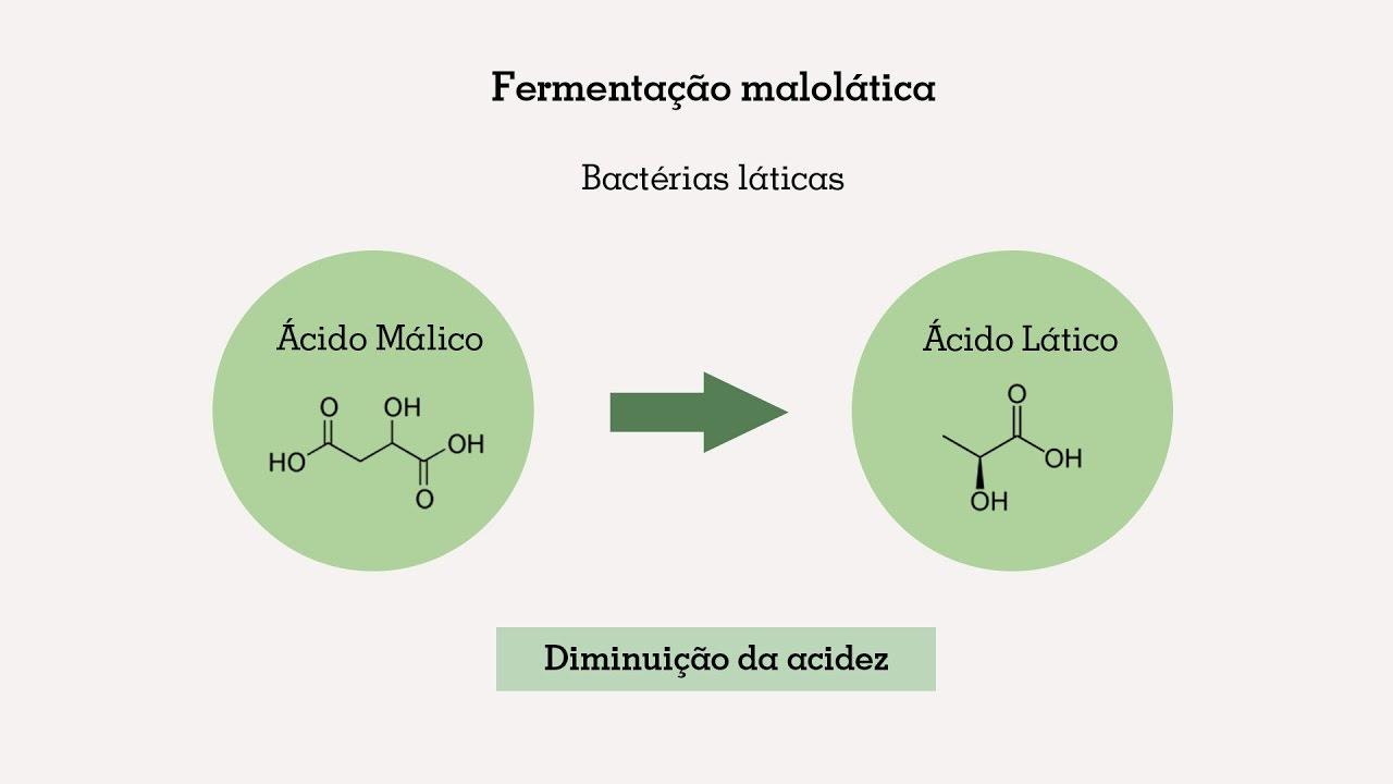 O que é a fermentação malolática? - Missão Sommelier (47) - YouTube
