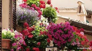 SPELLO Balconi e vicoli fioriti 2014 - Full HD