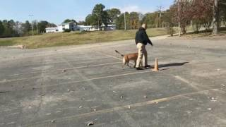 Max Obedience Routine