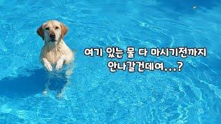 수영장 보자마자 냅다 입수해서 물부터 쳐 먹고 보는 리…