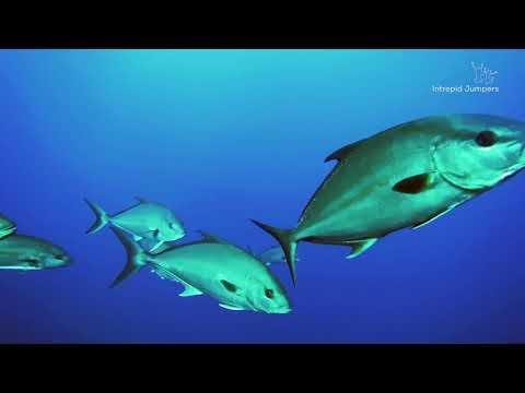 Açores, as ilhas encantadas - Azores, the enchanted islands