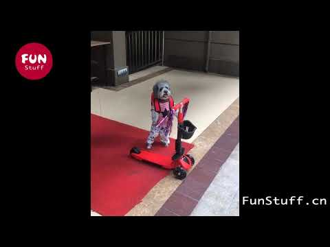 smart dog riding scooter