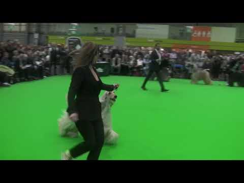 Crufts 2018 - Open Dog