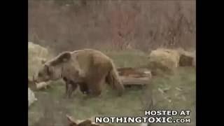 самые жестоке нападения медведя на человека