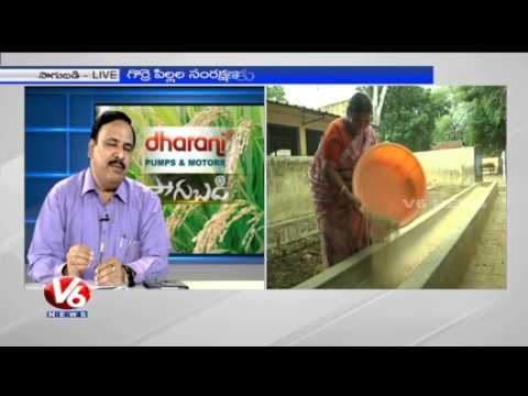 Sheep & Goat farming techniques by Animal Husbandry Director Venkateshwarlu - V6 Sagubadi