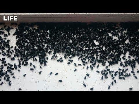 Полчища мух атаковали село в Челябинской области