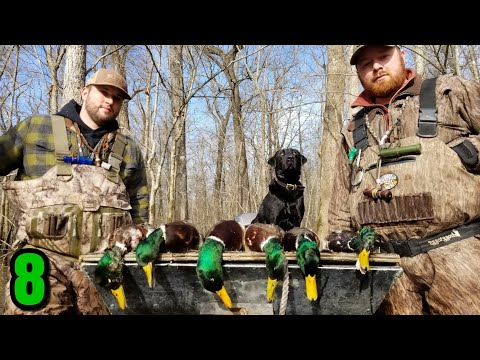 Green Timber Duck Hunting....Ducks EVERYWHERE (What Do We Do??)