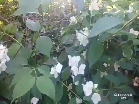 Ферментированные чаи из любых растений : Напитки