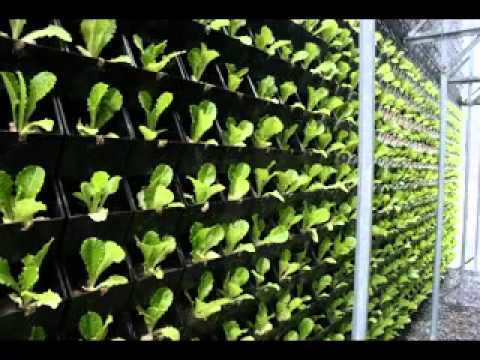 Easy vertical green wall design ideas - YouTube