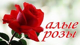 Алые розы  подарок 8 марта песня для женщин
