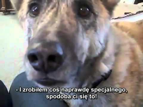 Mówiący Pies Napisy Pl Youtube