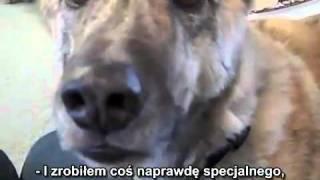Mówiący pies - napisy PL