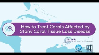 How To Treat Corals Affected by Stony Coral Tissue Loss Disease