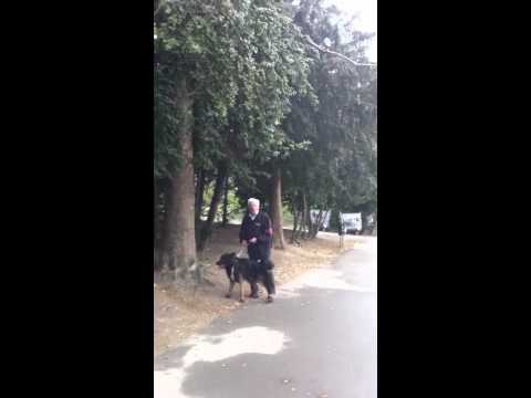 Crazy old man with dog