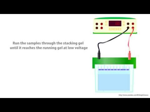 how to create sds gel calculate