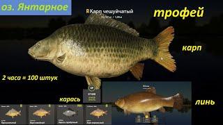 Русская рыбалка 4 оз Янтарное Карп чешуйчатый трофей линь трофей садок 2 часа 2 кукурузы