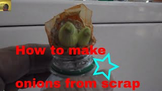 How to make onions from scrap