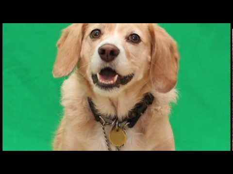 Simba the Dog Shows off Talents at Auditions
