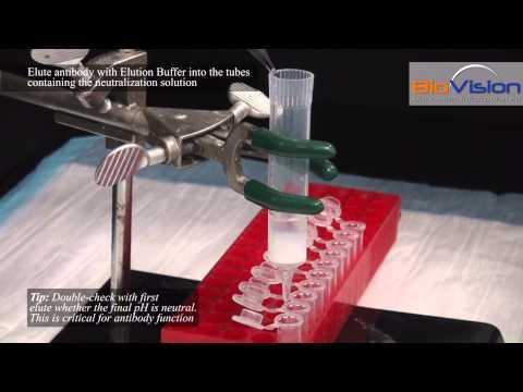 Antibody Purification Video   Biovision, Inc.
