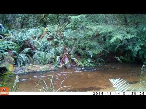 wild life camera footage