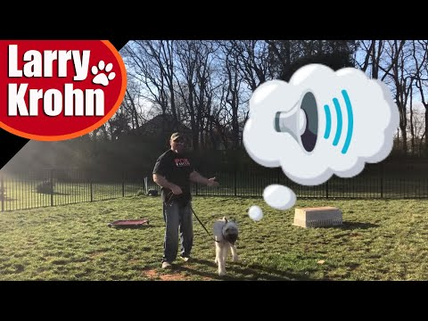Basic dog communication with humans / how to talk to your dog