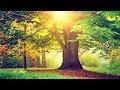 Relaxing Music 24/7, Meditation, Reiki Healing Music, Zen, Sleep Music, Calming Music, Sleep, Study