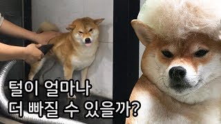 Furs are Coming Out [Shibainu Gom& Taeng]