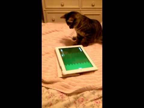 Gizmo kitten chases mouse on iPad2