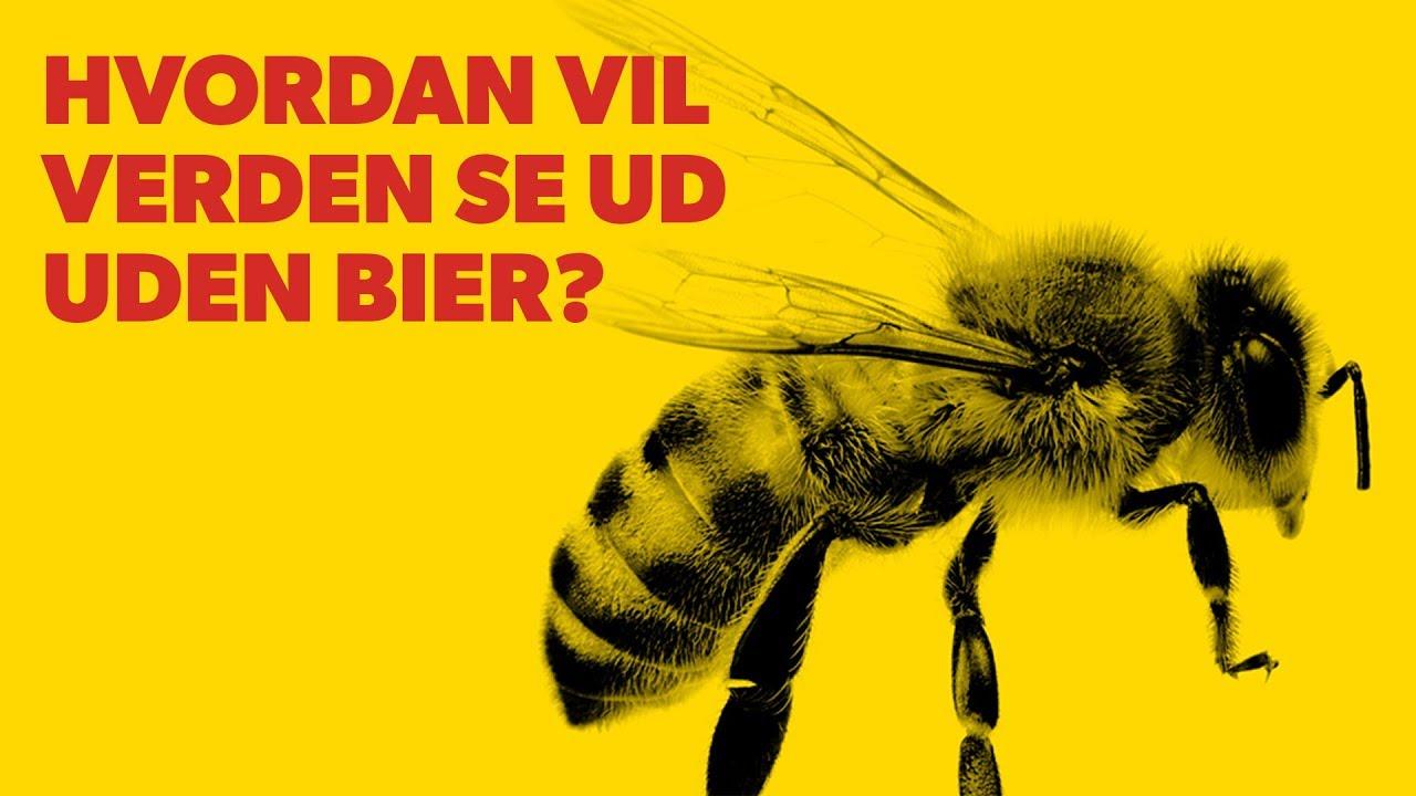 Hvordan vil verden se ud uden bier?